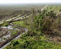 Rainforest being decimated by Wilmar coproration